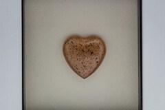 placenta heart
